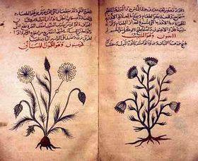 Guía árabe de plantas medicinales