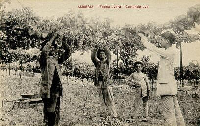 Cortando uva