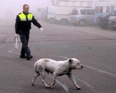 Peleas De Perros En Granada