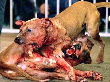 Peleas de perros en Granada: www.culturandalucia.com/peleas_de_perros_en_granada_.htm